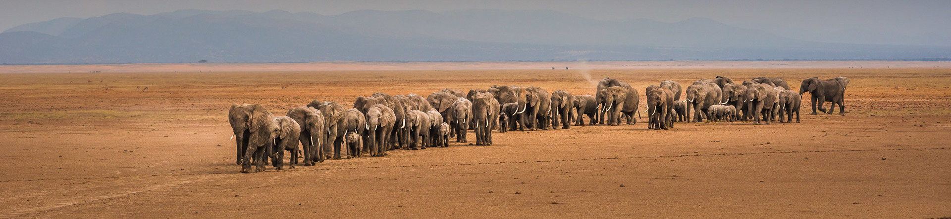 Africa_photo-safaris_elephants_Amboseli