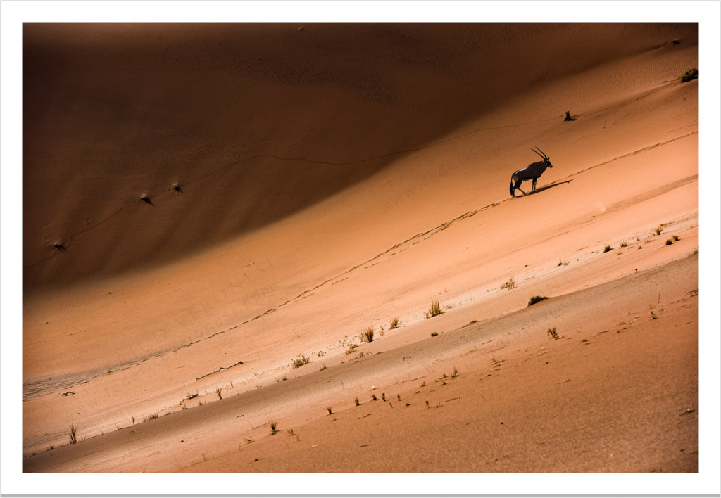 Gemsbok-dune_desert_wildlife-namibia-color_fine-art-print_12