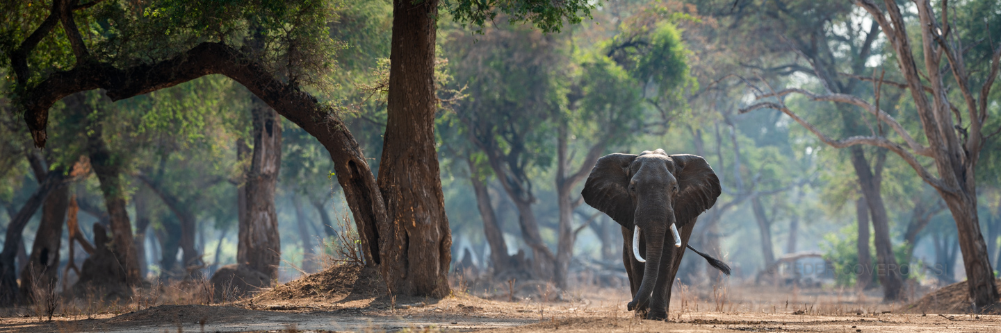 african_wildlife_photo_safaris_Mana-Pools-NP_Zimbabwe