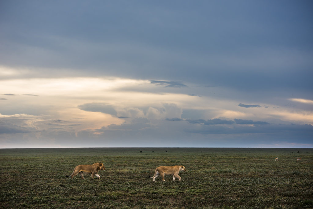 african_wildlife_photo_safaris_Ngorongoro-Conservation-Area_Tanzania
