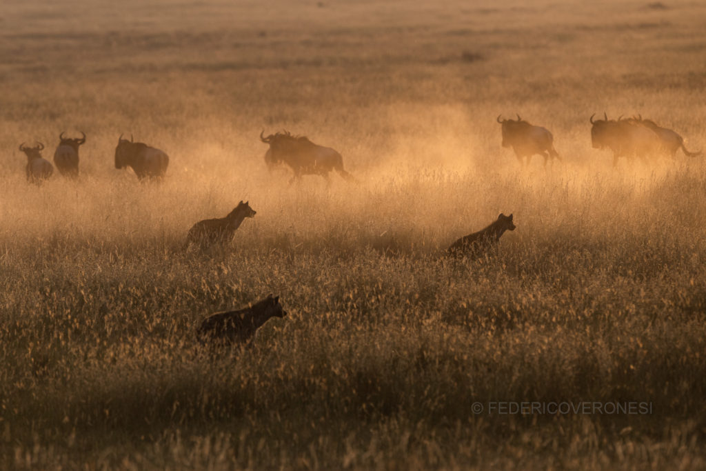 african_wildlife_photo_safaris_Serengeti-NP_Tanzania