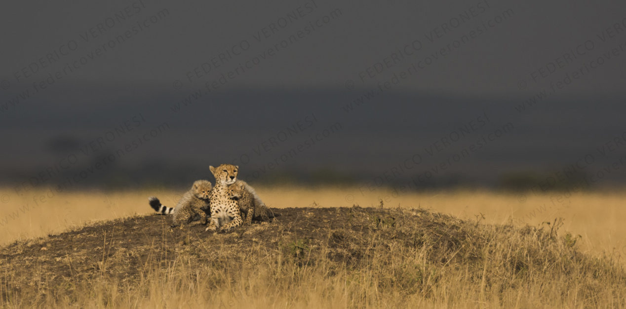 masai_mara-photo-safari-cheetah
